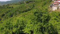 Yeşilin en güzeli Sakarya'da yaşanıyor
