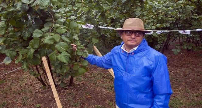 'Değerli Tarım' uygulamaları ile fındık üreticisine destek