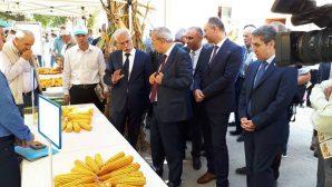 """Arifiye'de """"Mısır Tarla Günü"""" etkinliği gerçekleşti"""