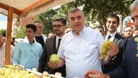 Pamukova'da Eko Pazar Doğal Ürünler ve Ayva Festivali