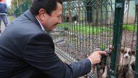 Vali Balkanlıoğlu Geçici Hayvan Barınağında İncelemelerde Bulundu