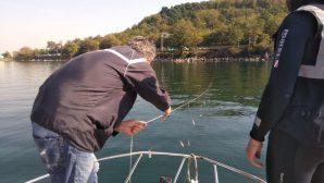 Sapanca Gölü'nde doğal yaşam korunuyor