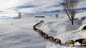 """""""Et tüketimi koyun, keçi, hindi, kaz ve ördekle çeşitlendirilmelidir"""""""