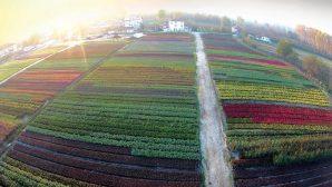 Bayraktar 'Süs bitkileri sektörü desteklenmelidir'