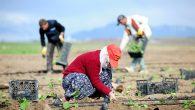 Ekim ayında bile tarımda istihdam 5,5 milyonu geçti