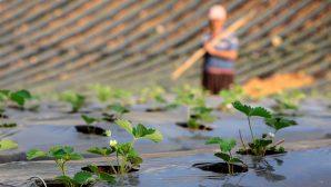 TZOB Genel Başkanı Bayraktar,'Örtü altıyla tarımda üretim kesintisiz sürüyor'