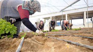 TZOB Genel Başkanı Bayraktar-Tarımın ücretsiz çalışanı kadınlar