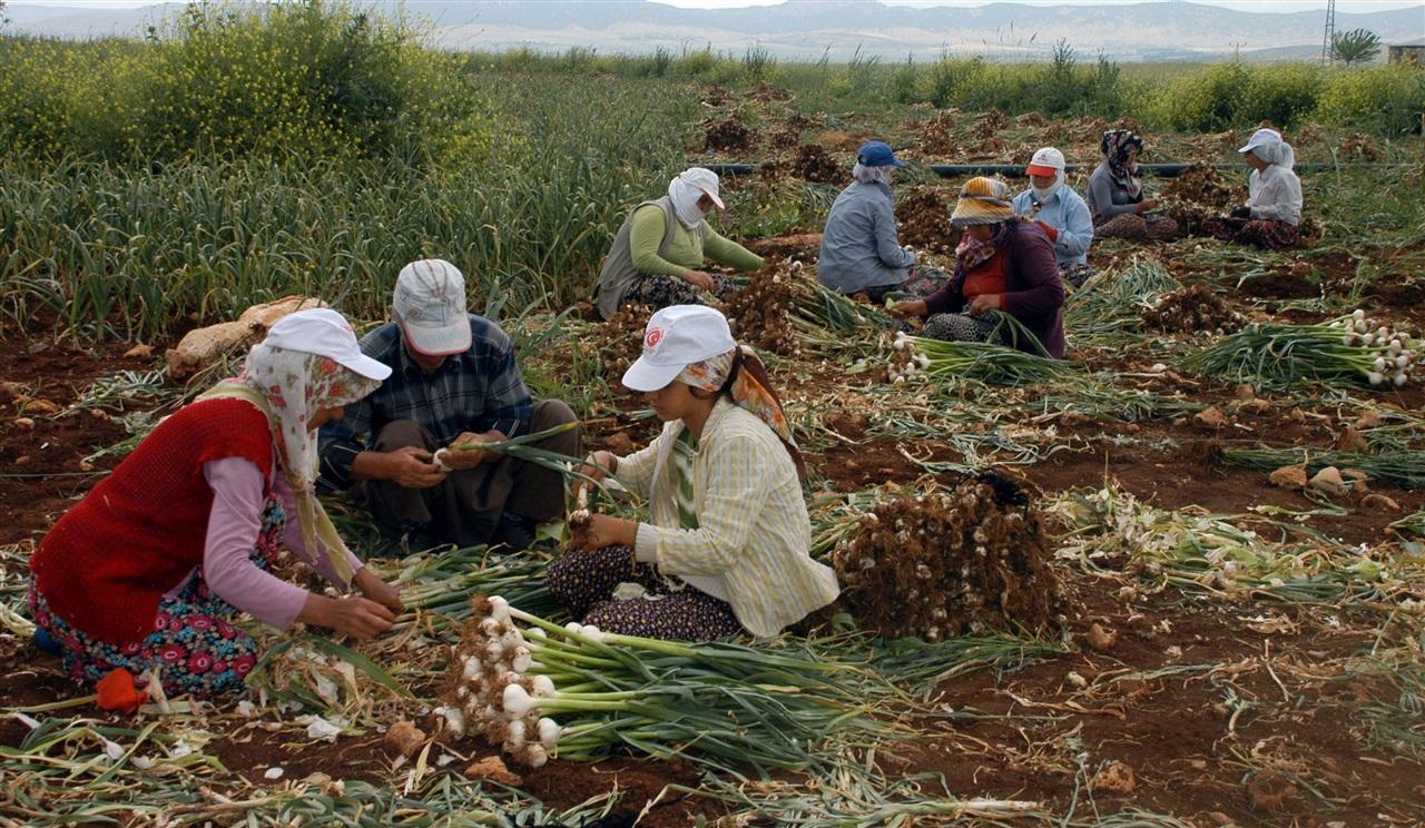 Kasım ayında tarımda istihdam 5,3 milyonu buldu