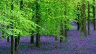 """TZOB Genel Başkanı Bayraktar """"Ormanlar, yaşam için vazgeçilmezdir"""""""