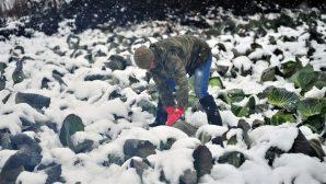 """TZOB Genel Başkanı Bayraktar: """"Üstü açık fabrika olan tarım için meteoroloji hayati önemdedir"""""""