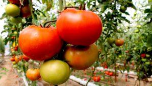 Organik tarım ve iyi tarım desteği başvurularında son gün 30 Mart…
