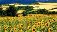 Yağlı tohumlu bitkiler desteğinde son gün 2 Nisan…