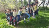 Ağaçlar Çocuk Açtı