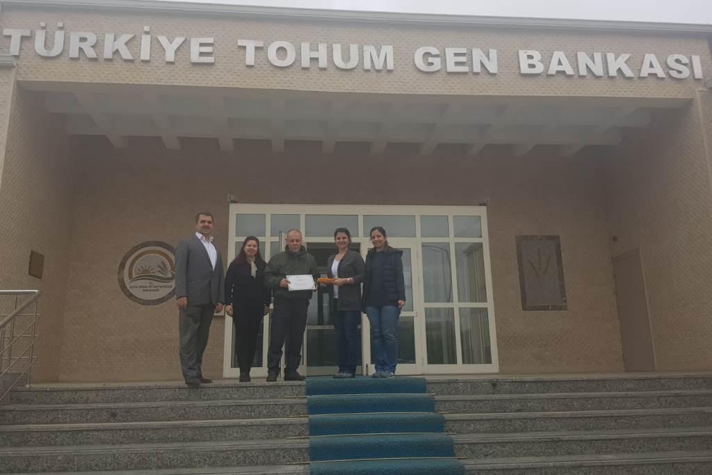 """""""Abhaz Mısırı"""" Türkiye Tohum Gen Bankası'na teslim edildi…"""