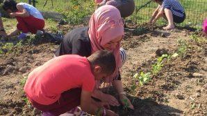 Bahçelerine domates, salatalık,biber ve kavunları ektiler.