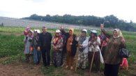 MHP İl Kadın Kolları Başkanı Tankal,Mısır Tarlasında destek istedi