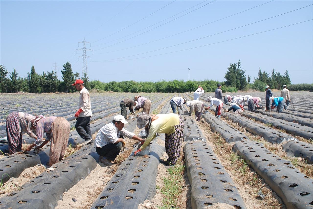 Tarımda istihdam Mart ayında 5 milyonu aştı…