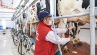 """""""Çiğ süt fiyatı sürdürülebilir üretimi desteklemelidir"""""""