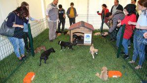 4 Ekim Hayvanları Koruma Günü Etkinlikleri sona erdi