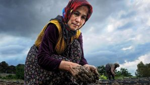 15 Ekim Dünya Kadın Çiftçiler Günü…