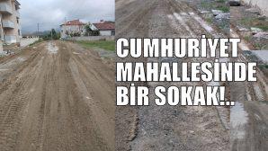 GÜMÜŞ SOKAK SAKİNLERİ YOLLARINA ÇARE ARIYOR!