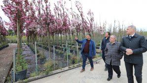 Vali Nayir Fidan ve Süs Bitkiciliği Firmalarını Ziyaret Etti
