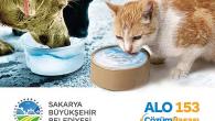 Sokak hayvanları için bir kap su