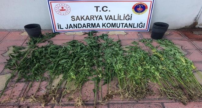 Sakarya Jandarma'dan uyuşturucuya geçit yok!