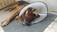 Kanserli tümörler Arifiye'de başarılı bir ameliyatla alındı.