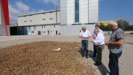Vali Nayir Fındık Fabrikasında İncelemelerde Bulundu