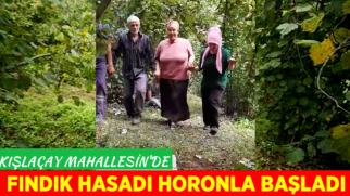 KIŞLAÇAY'DA HORONLU FINDIK HASADI