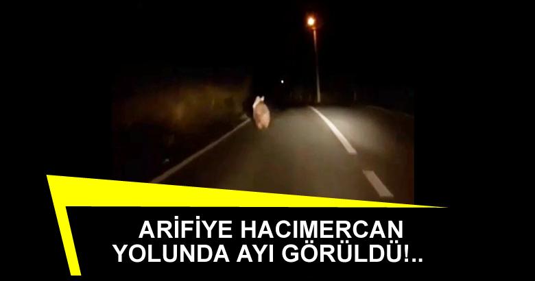 ARİFİYE HACIMERCAN YOLUNDA AYI GÖRÜLDÜ!