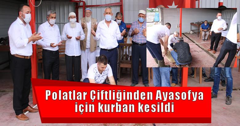 Polatlar Çiftliğinden Ayasofya için kurban kesildi