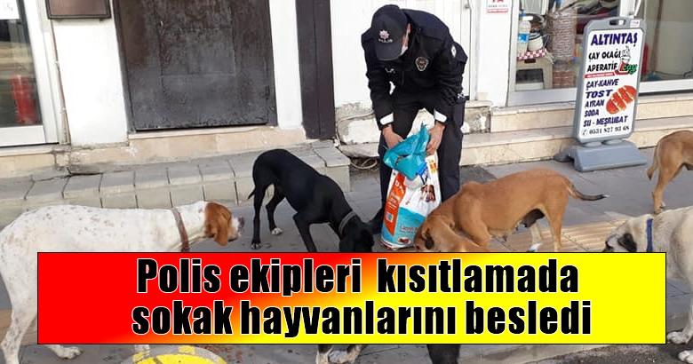 Polis ekipleri kısıtlamada sokak hayvanlarını besledi