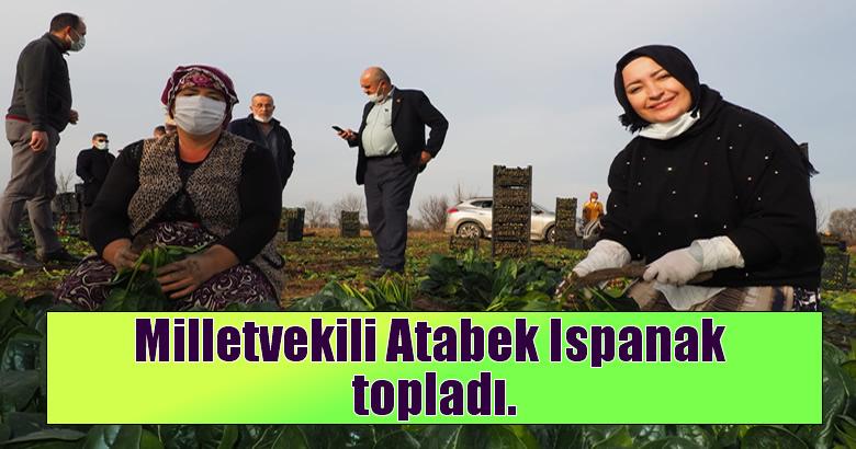 Milletvekili Atabek Ispanak topladı.