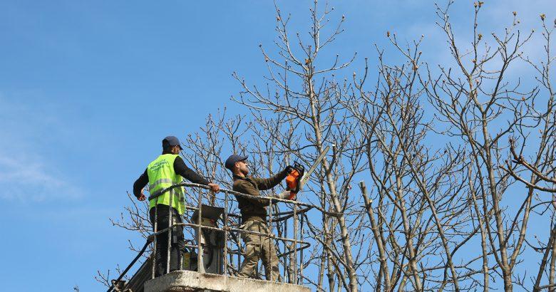 Büyükşehir ağaç budama çalışmalarını sürdürüyor