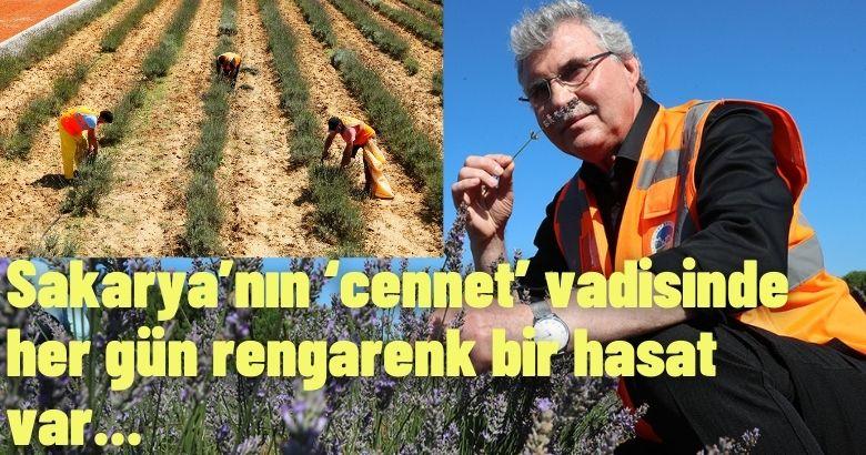 Sakarya'nın 'cennet' vadisinde her gün rengarenk bir hasat var
