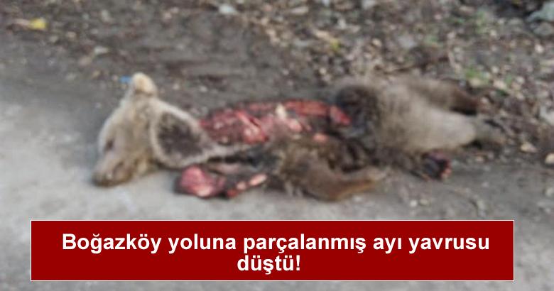 Boğazköy yoluna   parçalanmış ayı yavrusu düştü.
