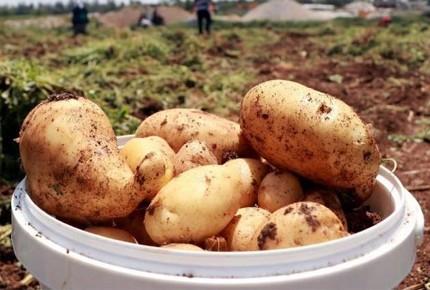 Patates ve soğanda ön izin şartı kalktı