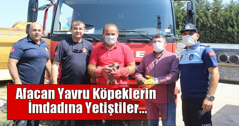 Afacan Yavru Köpekler Arifiye Belediyesi Zabıta ekipleri ve İtfaiye ekiplerince kurtarıldı.