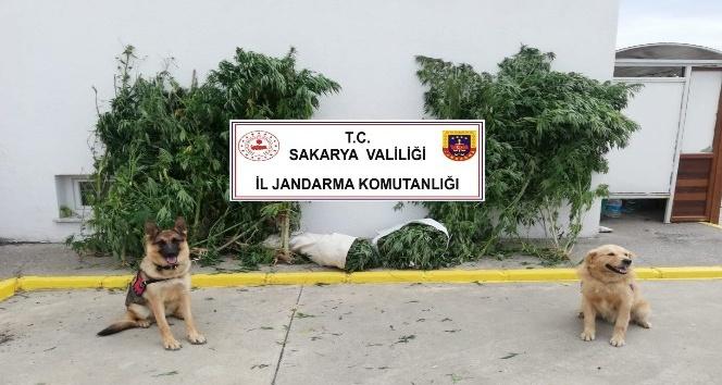 Uyuşturucu Operasyonunda Arifiye'de var!