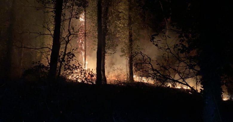 Arifiye İl Ormanında yangın!