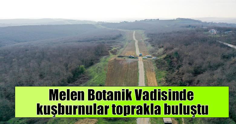 Melen Botanik Vadisinde kuşburnular toprakla buluştu