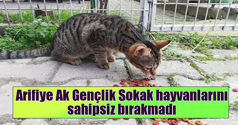 Arifiye Ak Gençlik Sokak hayvanlarını sahipsiz bırakmadı