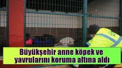 Arifiye Cumhuriyet Mahallesi'ndeki sahipsiz köpek ve yavruları  koruma altına alındı