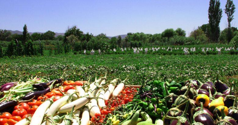 """""""Bugünün Çocukları, Tarımın Geleceği''"""