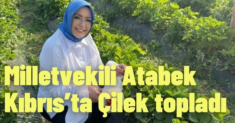 Milletvekili Atabek Kıbrıs'ta Çilek topladı